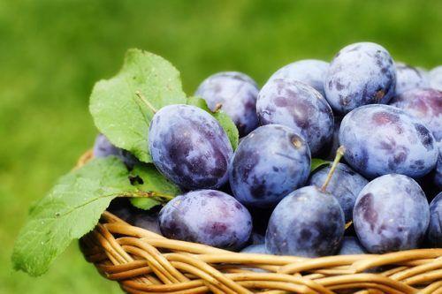 Quetsche prunes bio | Bébé M